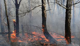Pożary w Arktyce wyemitowały w tym roku już o 35 proc. więcej CO2 niż w całym 2019