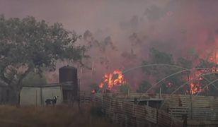 Pożary lasów w Hiszpanii. Ponad 500 strażaków walczy z żywiołem. Ewakuowano 3,5 tys. osób