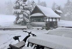Co się dzieje z tą pogodą? Pierwsze grzybobranie… w maju, w górach śnieg
