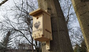 Katowice. Pomogą ptakom. W mieście zawiśnie 90 budek lęgowych