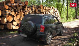 Skandaliczne zachowanie leśników. W Puszczy Białowieskiej znów łamią prawo