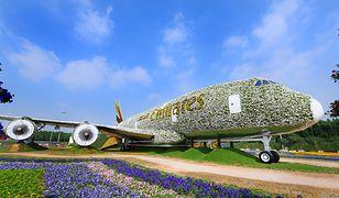 Samolot stworzony z… pół miliona kwiatów!