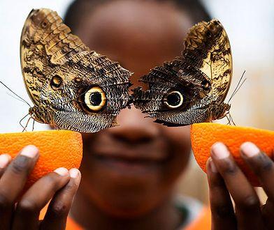 Efekt motyla - Londyn, Wielka Brytania