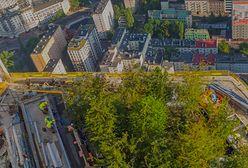 Warszawa. Korony najbliżej nieba. Drzewa wjechały na taras Varso Tower
