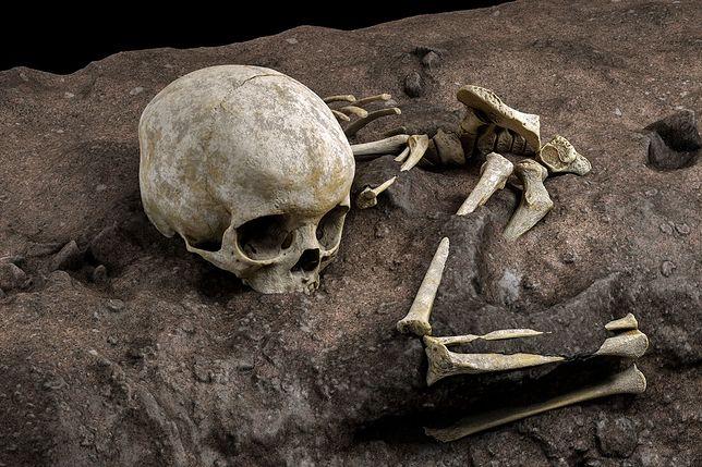 Komputerowa rekonstrukcja odnalezionych w grobie kości dziecka