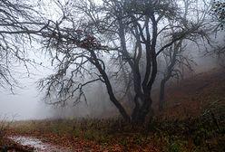 Co nas czeka na początku grudnia? Prognoza pogody