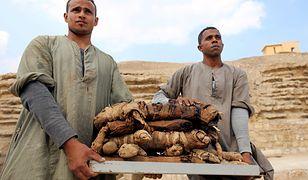 Mumie kotów i skarabeuszy