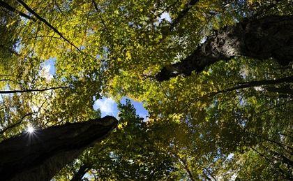 TK: zasady kar za wycinkę drzew - niekonstytucyjne