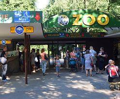 Skandal w Poznaniu. Do zoo nie wpuszczono chorego 2-latka. Dyrekcja się tłumaczy