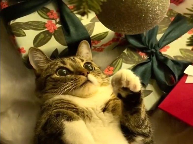 Kot zobaczył błyszczącą bombkę. Jego reakcja? Rozbroiła internautów!