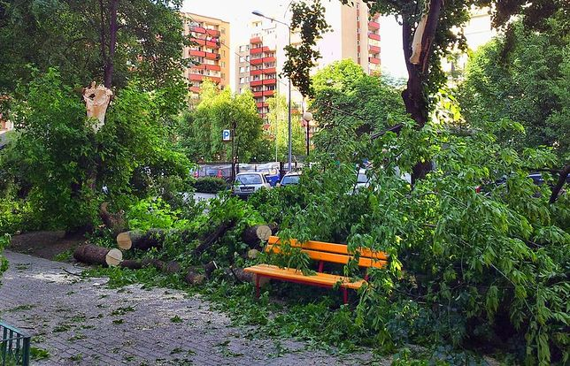 Kolejne drzewa runęły na samochody