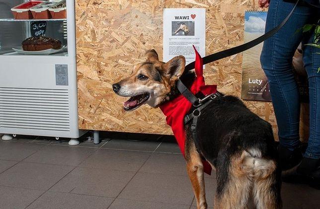 Miasto zachęca do adopcji psów. W Centrum powstanie mural