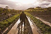 Porozumienie ws. polityki rolnej i dopłat