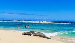 Afera na Hawajach. Turyści przesadzili
