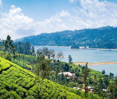 Zielone plantacje herbaty, poławiacze ryb w Ahangamie i świątynie skalne w Dambulli. Witajcie na Sri Lance