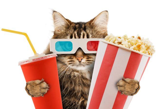 Oglądanie filmów z kotami poprawia humor. Sprawdź nasze propozycje