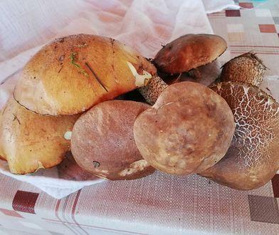Mazowsze. Sprawdź, gdzie w okolicach Warszawy można zebrać najwięcej grzybów