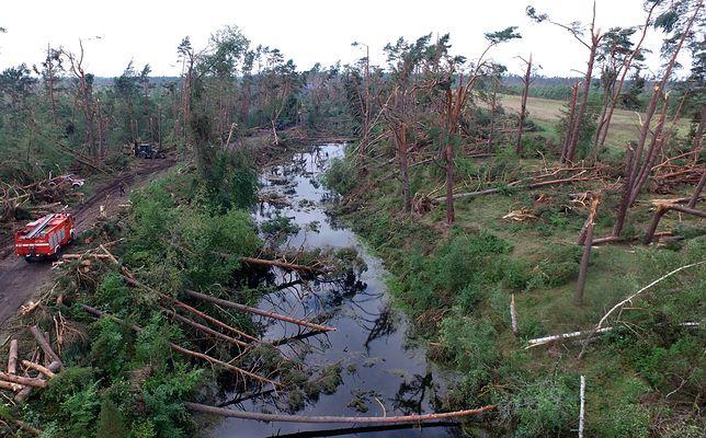 Zniszczone lasy w okolicach Rytla