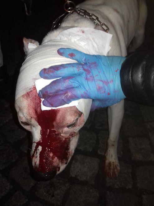 Ojciec zaatakowanej 8-latki ranił psa nożem.