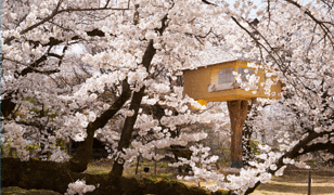 Najbardziej niezwykłe domki na drzewie