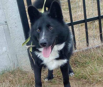 Awantura o adopcję psa. Opiekunka nie pozwoli, aby bezdomny pies Blackie trafił do myśliwego i brał udział w polowaniach.