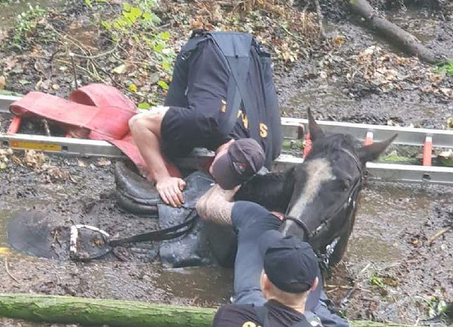 Wrocław. Koń i jego właścicielka uratowani dzięki sprawnej akcji ratunkowej