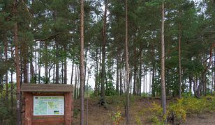 Koronawirus w Warszawie. Kampinoski Park Narodowy zamknięty od czwartku