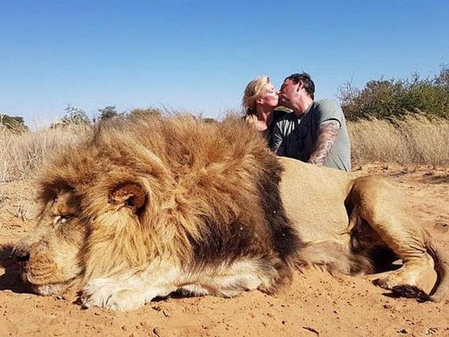 Para całuje się nad upolowanym lwem. Przerażające zdjęcie w sieci