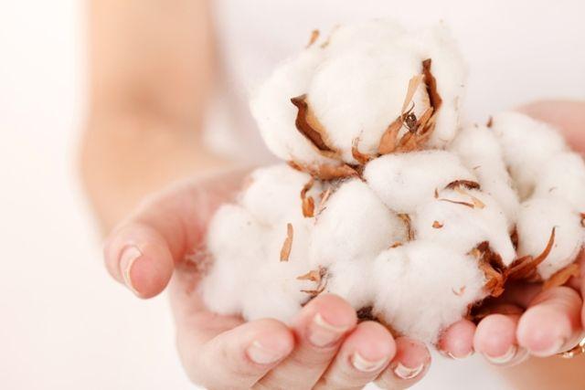 Poznaj właściwości bawełny