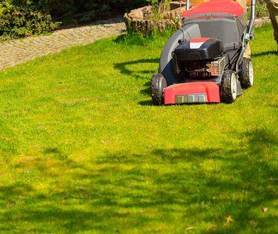Pielęgnacja trawnika wiosną