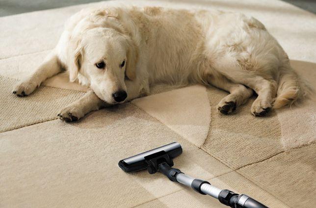 Wiele osób marzy o posiadaniu psa czy kota. Niestety część z nich rezygnuje w obliczu codziennego borykania się z sierścią, która potrafi być wszędzie. Na szczęście nowoczesne sprzęty sprzątające zaprojektowane są tak, aby wychwytywać nawet najmniejsze włoski.