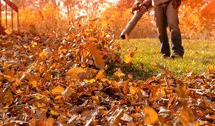 Przygotuj trawnik do zimy. Kilka jesiennych porad dla działkowiczów