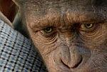 [wideo] ''Geneza Planety Małp'' - zobacz fragmenty filmu!