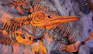 Szczątki ichtiozaura znaleziono na plaży Stolford