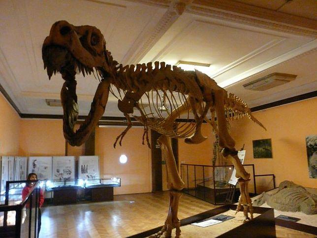 Na herbatce u czarnej wdowy i dinozaura. Zwiedź Muzeum Ewolucji z przewodnikiem!