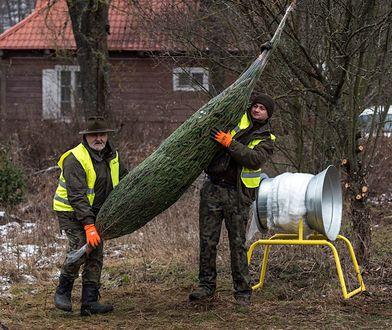 Warto zadbać o to, aby zakupione drzewko było świeże