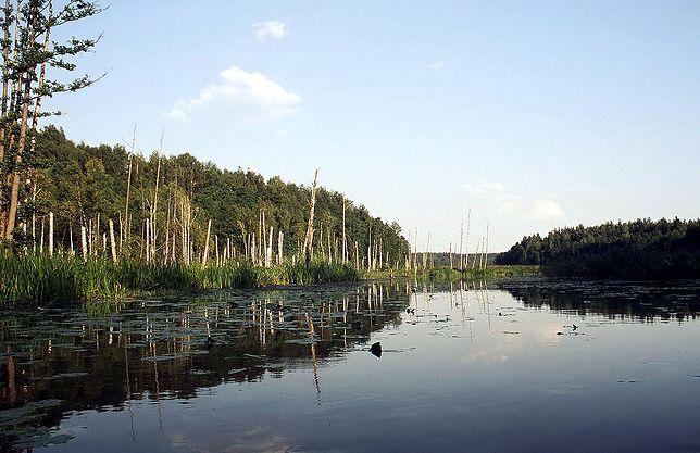 Część Doliny Rospudy w okolicy wsi Kotowina