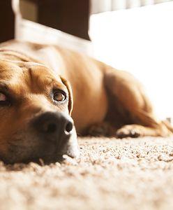 Twój pies nudzi się w domu? Zapisz go na świetlicę!