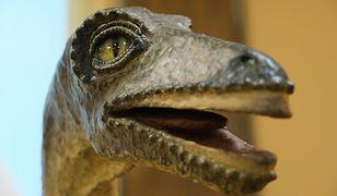 """USA. Najnowsze odkrycie naukowców dotyczące wyginięcia dinozaurów. """"Zagadka kompletna"""""""