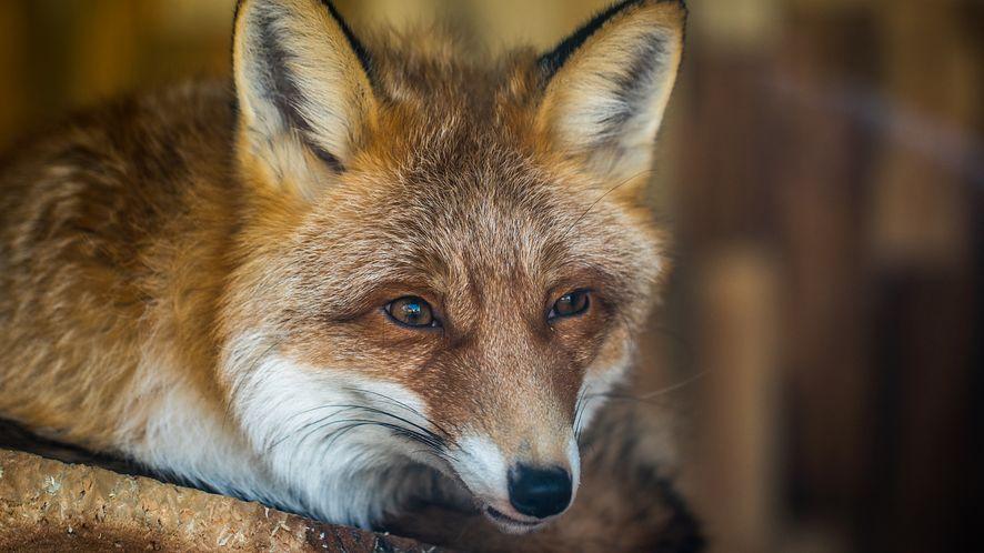 Firefox 65 już jest dostępny. W końcu poradzi sobie z grafikami WebP