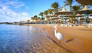Hurghada to najpopularniejszy wśród Polaków kurort w Egipcie