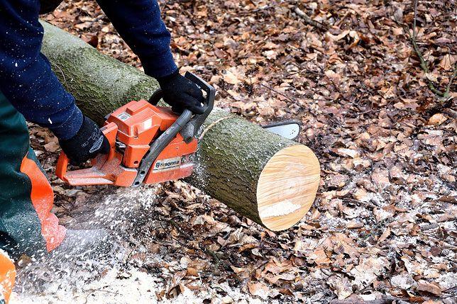 Zachodniopomorskie: Tragiczny wypadek przy ścinaniu drzew. Nie żyje pilarz