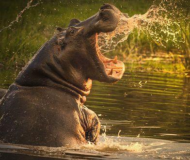 Potraktujmy to tragiczne wydarzenie jako przestrogę i nie zbliżajmy się do dzikich zwierząt