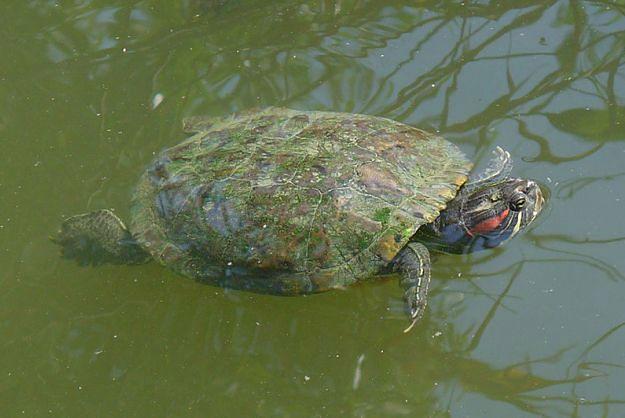 W poznańskim zoo zabito 35 żółwi. Komisja sprawdza, czy było to konieczne