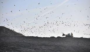 Góra śmieci na Radiowie. Mieszkańcy nie mogą znieść smrodu