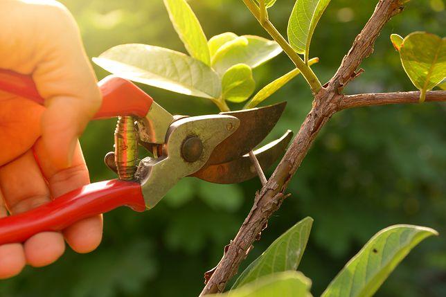 Inspekcja Handlowa skontrolowała ponad 160 maszyn ogrodniczych