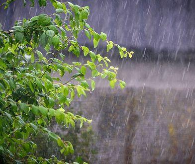 Rośliny boją się wody