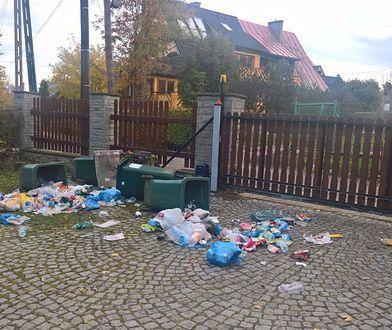 Niedźwiedzie splądrowały kosze na śmieci przed pensjonatem
