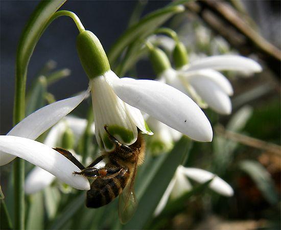 Fruwają z kwiatka na kwiatek - zdjęcia