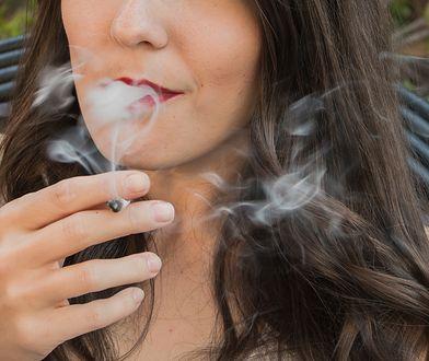Cera palacza charakteryzuje się ziemistym kolorytem, bruzdami, zmarszczkami i przebarwieniami.